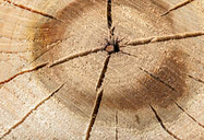 End of a log that is cracked. This shows that the wood is dry. The picture was taken in Brome Lake.